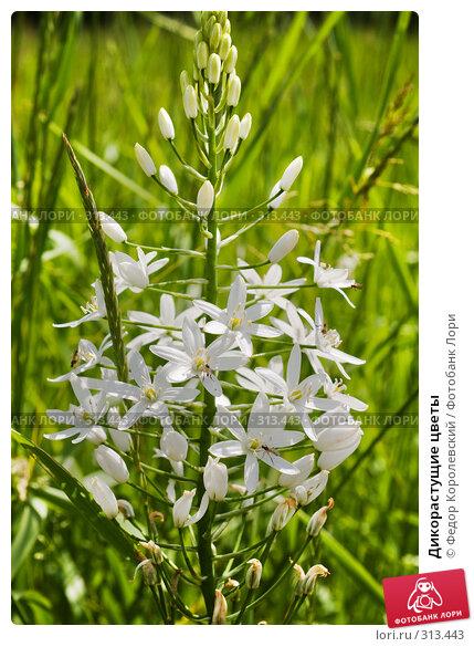 Дикорастущие цветы, фото № 313443, снято 4 июня 2008 г. (c) Федор Королевский / Фотобанк Лори