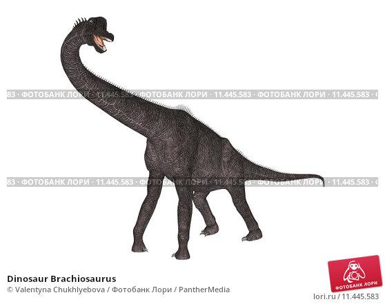 Купить «Dinosaur Brachiosaurus», иллюстрация № 11445583 (c) PantherMedia / Фотобанк Лори