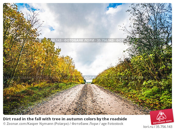 Dirt road in the fall with tree in autumn colors by the roadside. Стоковое фото, фотограф Zoonar.com/Kasper Nymann (Polarpx) / age Fotostock / Фотобанк Лори
