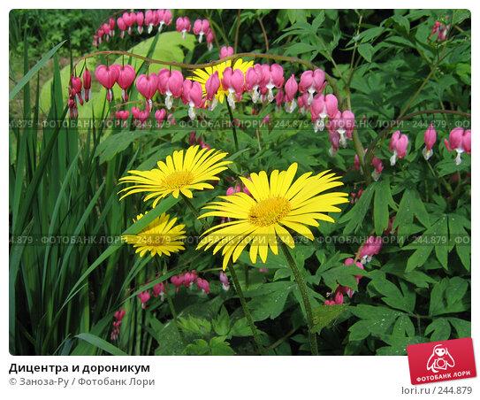 Дицентра и дороникум, фото № 244879, снято 10 июня 2006 г. (c) Заноза-Ру / Фотобанк Лори