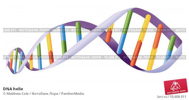 DNA helix. Стоковая иллюстрация, иллюстратор Matthew Cole / PantherMedia / Фотобанк Лори