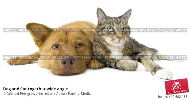 Dog and Cat together wide angle. Стоковое фото, фотограф Michael Pettigrew / PantherMedia / Фотобанк Лори