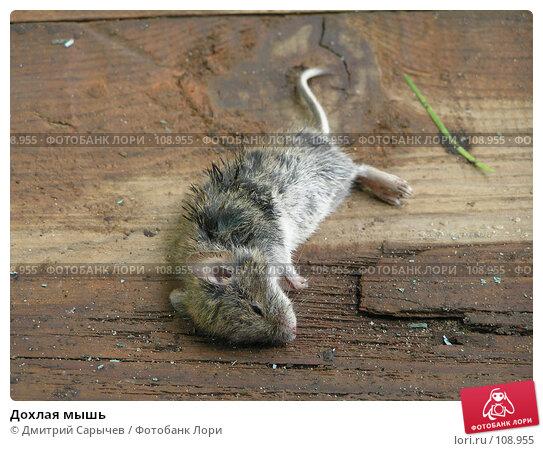 Дохлая мышь, фото № 108955, снято 3 сентября 2006 г. (c) Дмитрий Сарычев / Фотобанк Лори