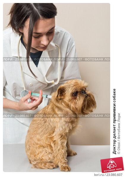 Купить «Доктор делает прививки собаке», фото № 23080607, снято 5 июня 2016 г. (c) Okssi / Фотобанк Лори