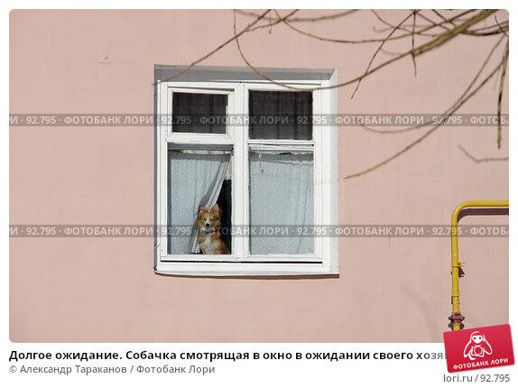 Долгое ожидание. Собачка смотрящая в окно в ожидании своего хозяина., фото № 92795, снято 25 марта 2017 г. (c) Александр Тараканов / Фотобанк Лори