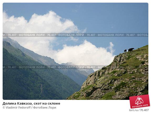 Долина Кавказа, скот на склоне, фото № 70407, снято 18 июля 2007 г. (c) Vladimir Fedoroff / Фотобанк Лори