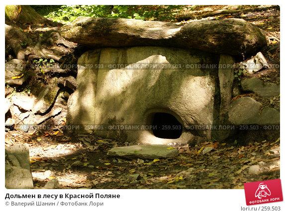 Дольмен в лесу в Красной Поляне, фото № 259503, снято 22 сентября 2007 г. (c) Валерий Шанин / Фотобанк Лори