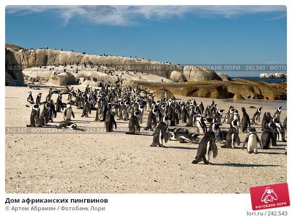 Дом африканских пингвинов, фото № 242543, снято 2 февраля 2008 г. (c) Артем Абрамян / Фотобанк Лори