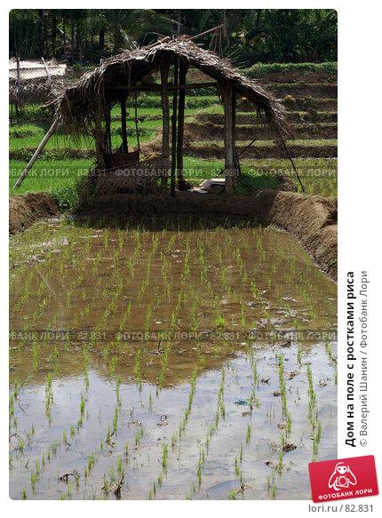 Дом на поле с ростками риса, фото № 82831, снято 13 июня 2007 г. (c) Валерий Шанин / Фотобанк Лори