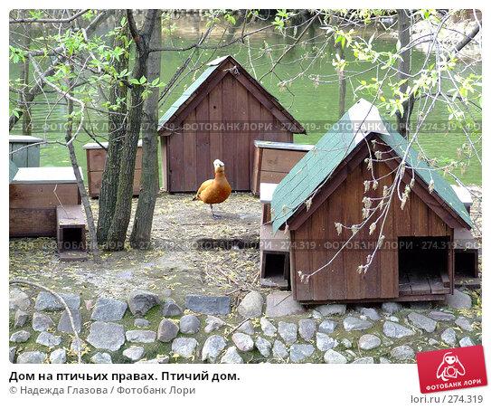 Дом на птичьих правах. Птичий дом., фото № 274319, снято 2 мая 2008 г. (c) Надежда Глазова / Фотобанк Лори