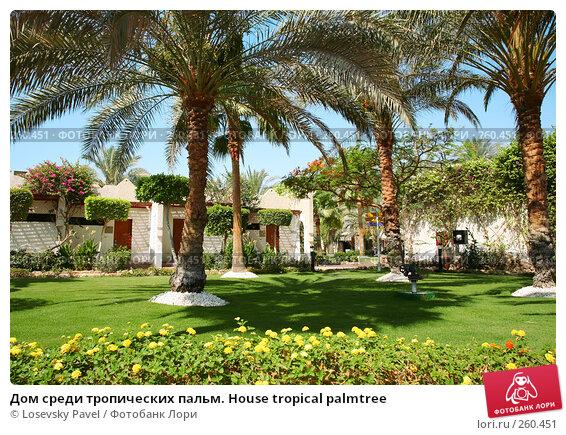 Дом среди тропических пальм. House tropical palmtree, фото № 260451, снято 17 мая 2007 г. (c) Losevsky Pavel / Фотобанк Лори