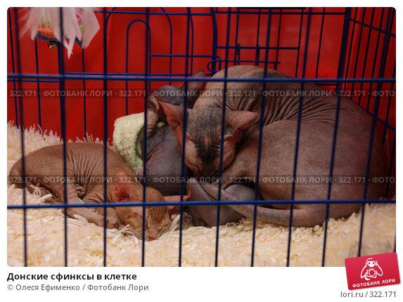 Донские сфинксы в клетке, фото № 322171, снято 18 мая 2008 г. (c) Олеся Ефименко / Фотобанк Лори