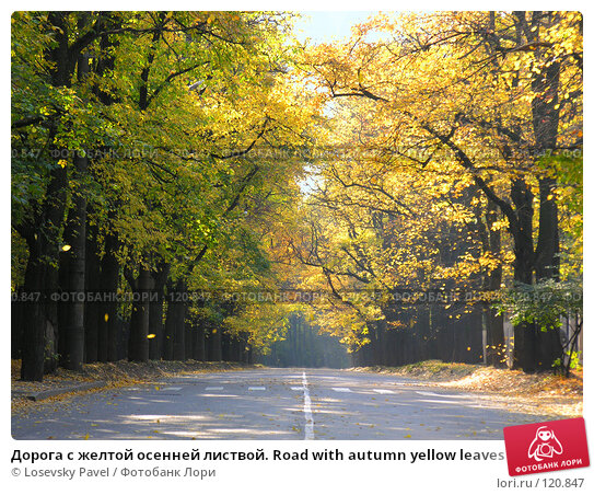 Дорога с желтой осенней листвой. Road with autumn yellow leaves, фото № 120847, снято 2 октября 2005 г. (c) Losevsky Pavel / Фотобанк Лори