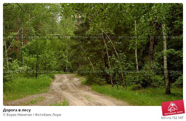 Купить «Дорога в лесу», фото № 52147, снято 10 июня 2007 г. (c) Борис Никитин / Фотобанк Лори