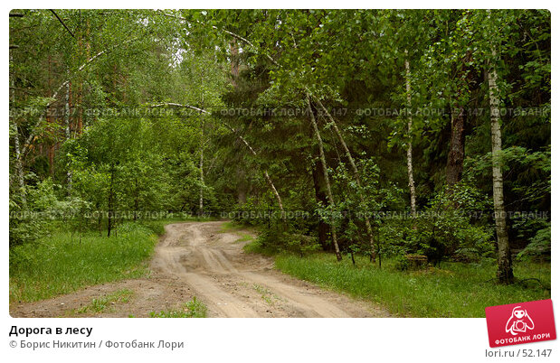 Дорога в лесу, фото № 52147, снято 10 июня 2007 г. (c) Борис Никитин / Фотобанк Лори