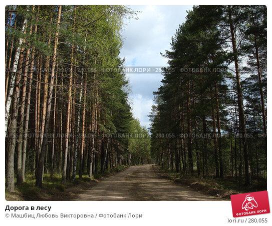 Дорога в лесу, фото № 280055, снято 9 мая 2008 г. (c) Машбиц Любовь Викторовна / Фотобанк Лори