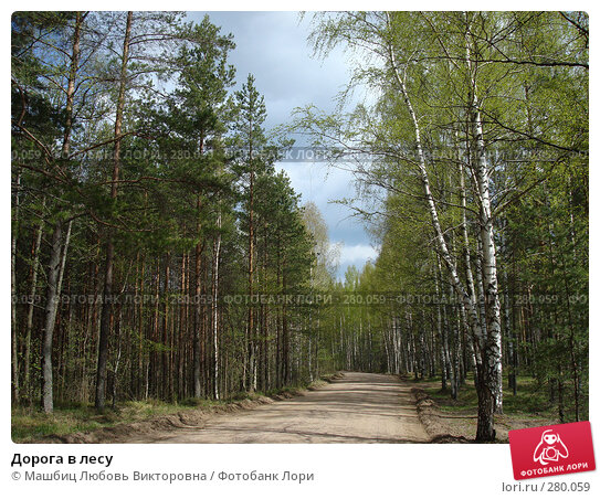 Дорога в лесу, фото № 280059, снято 9 мая 2008 г. (c) Машбиц Любовь Викторовна / Фотобанк Лори