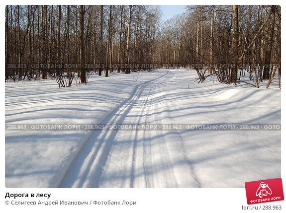 Купить «Дорога в лесу», фото № 288963, снято 23 марта 2008 г. (c) Селигеев Андрей Иванович / Фотобанк Лори