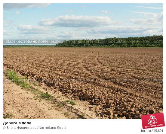 Дорога в поле, фото № 45891, снято 12 июня 2006 г. (c) Елена Филиппова / Фотобанк Лори