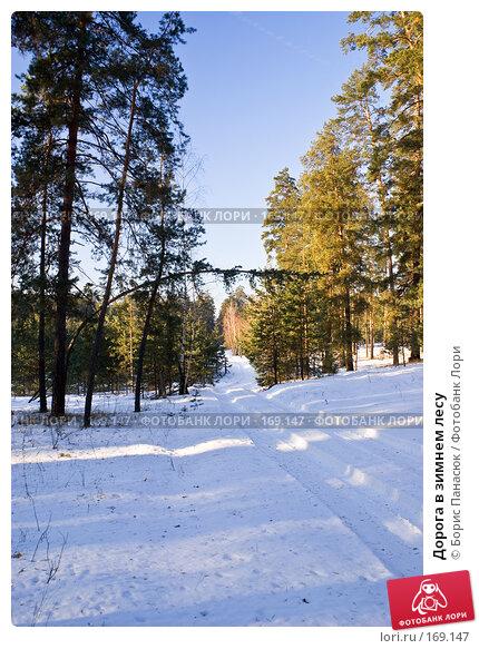 Дорога в зимнем лесу, фото № 169147, снято 31 декабря 2007 г. (c) Борис Панасюк / Фотобанк Лори