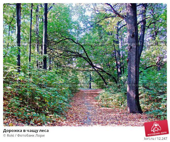 Дорожка в чащу леса, фото № 12247, снято 28 сентября 2006 г. (c) Roki / Фотобанк Лори