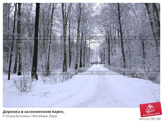 Дорожка в заснеженном парке,, фото № 95199, снято 5 марта 2007 г. (c) Елена Блохина / Фотобанк Лори