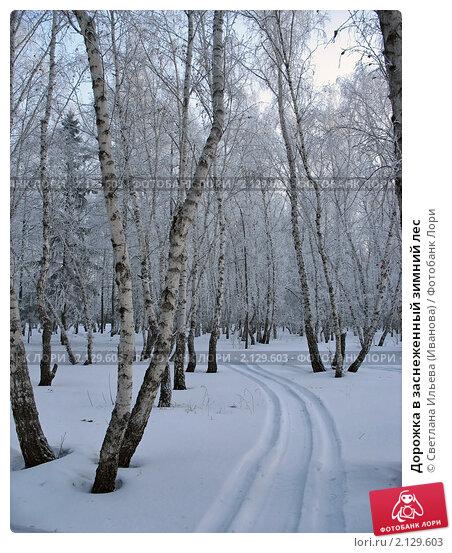 Купить «Дорожка в заснеженный зимний лес», фото № 2129603, снято 8 января 2007 г. (c) Светлана Ильева (Иванова) / Фотобанк Лори