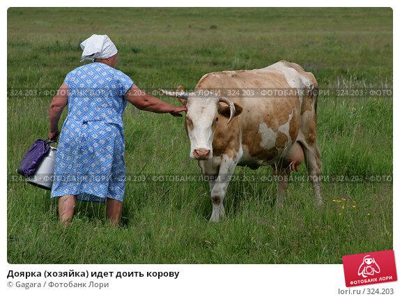Доярка(хозяйка) идет доить корову, фото № 324203, снято 8 октября 2007 г. (c) Gagara / Фотобанк Лори