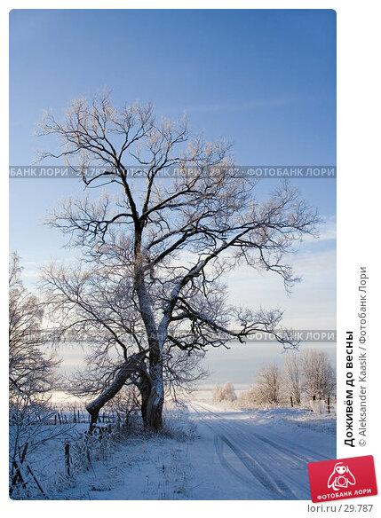 Доживём до весны, фото № 29787, снято 4 декабря 2016 г. (c) Aleksander Kaasik / Фотобанк Лори