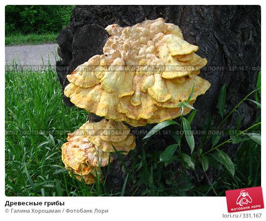 Древесные грибы, фото № 331167, снято 7 июня 2008 г. (c) Галина Хорошман / Фотобанк Лори