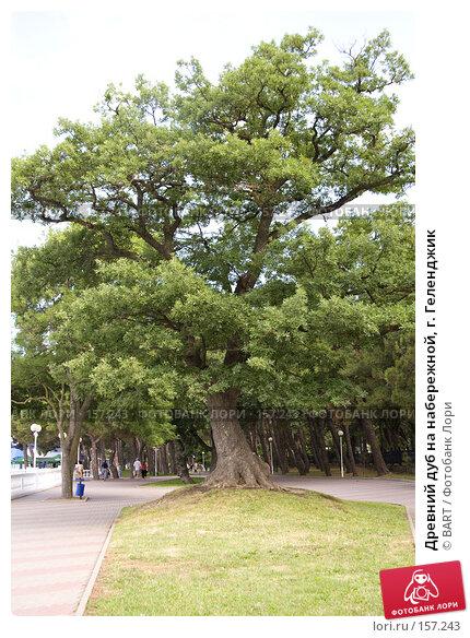 Купить «Древний дуб на набережной, г. Геленджик», фото № 157243, снято 19 марта 2018 г. (c) BART / Фотобанк Лори