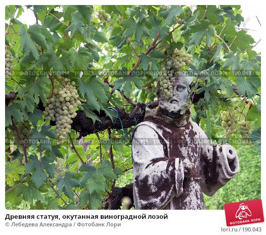 Древняя статуя, окутанная виноградной лозой, фото № 190043, снято 4 августа 2006 г. (c) Лебедева Александра / Фотобанк Лори