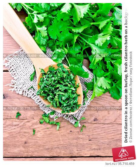 Dried cilantro in a spoon on burlap, fresh cilantro herb on a background... Стоковое фото, фотограф Zoonar.com/kostrez / easy Fotostock / Фотобанк Лори