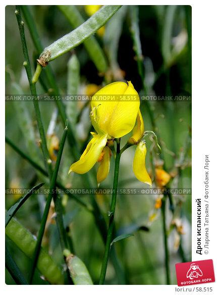 Дрок испанский, фото № 58515, снято 26 июня 2007 г. (c) Ларина Татьяна / Фотобанк Лори