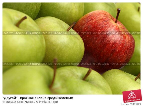 """Купить «""""Другой"""" - красное яблоко среди зеленых», фото № 242823, снято 16 марта 2008 г. (c) Михаил Коханчиков / Фотобанк Лори"""