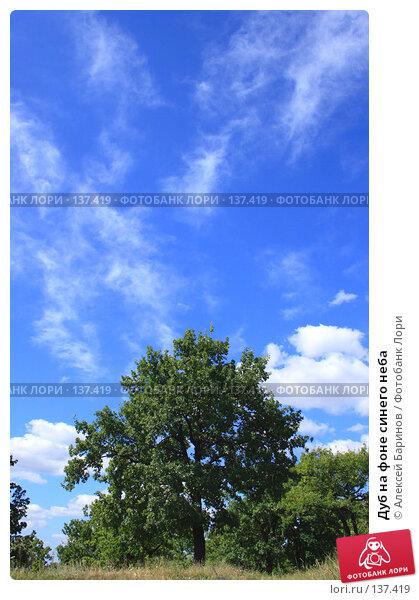 Дуб на фоне синего неба, фото № 137419, снято 9 августа 2007 г. (c) Алексей Баринов / Фотобанк Лори