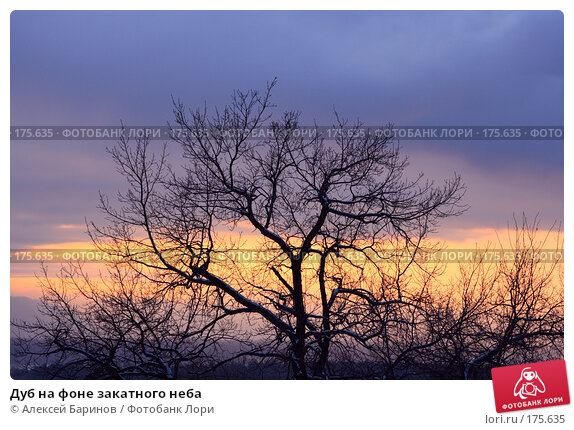 Дуб на фоне закатного неба, фото № 175635, снято 7 января 2008 г. (c) Алексей Баринов / Фотобанк Лори