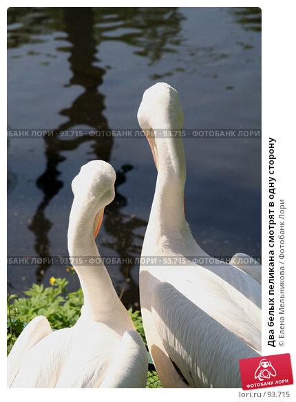 Два белых пеликана смотрят в одну сторону, фото № 93715, снято 18 мая 2007 г. (c) Елена Мельникова / Фотобанк Лори
