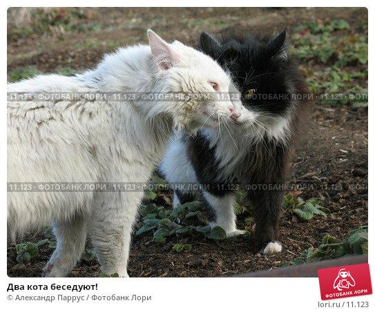 Два кота беседуют!, фото № 11123, снято 9 апреля 2006 г. (c) Александр Паррус / Фотобанк Лори