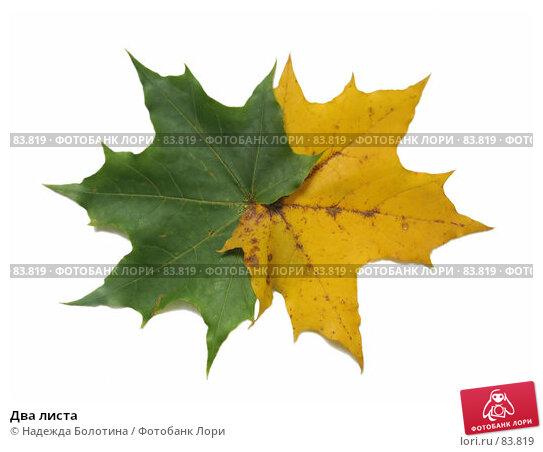 Два листа, фото № 83819, снято 7 октября 2006 г. (c) Надежда Болотина / Фотобанк Лори