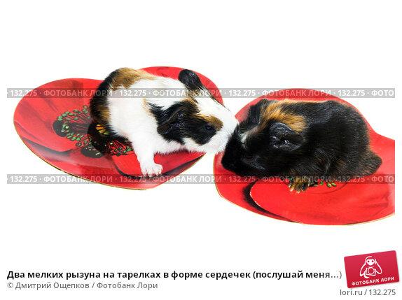 Два мелких рызуна на тарелках в форме сердечек (послушай меня...), фото № 132275, снято 20 декабря 2006 г. (c) Дмитрий Ощепков / Фотобанк Лори