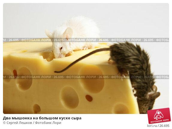 Два мышонка на большом куске сыра, фото № 26695, снято 18 марта 2007 г. (c) Сергей Лешков / Фотобанк Лори