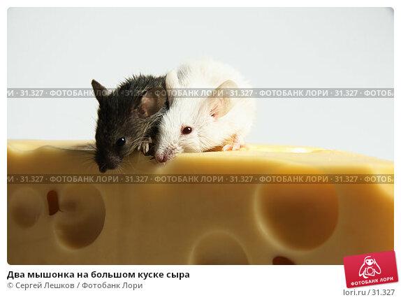 Два мышонка на большом куске сыра, фото № 31327, снято 18 марта 2007 г. (c) Сергей Лешков / Фотобанк Лори