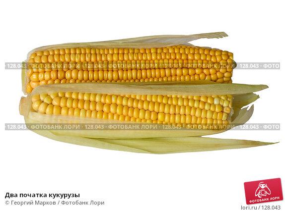 Два початка кукурузы, фото № 128043, снято 9 октября 2006 г. (c) Георгий Марков / Фотобанк Лори