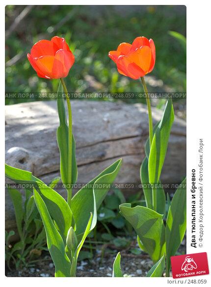 Два тюльпана и бревно, фото № 248059, снято 10 апреля 2008 г. (c) Федор Королевский / Фотобанк Лори