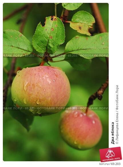 Купить «Два яблока», фото № 69203, снято 1 августа 2007 г. (c) Лифанцева Елена / Фотобанк Лори