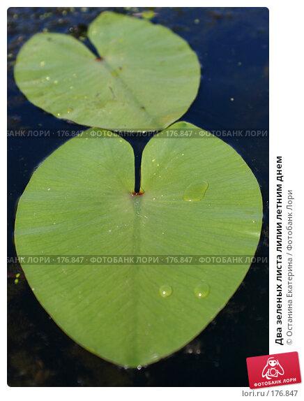 Купить «Два зеленых листа лилии летним днем», фото № 176847, снято 29 июня 2007 г. (c) Останина Екатерина / Фотобанк Лори
