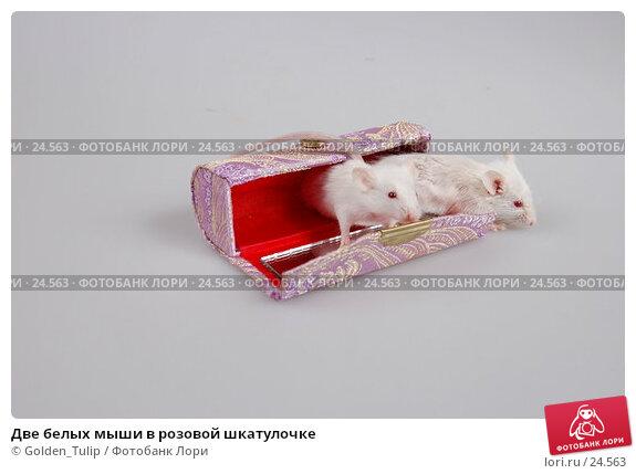 Две белых мыши в розовой шкатулочке, фото № 24563, снято 18 марта 2007 г. (c) Golden_Tulip / Фотобанк Лори