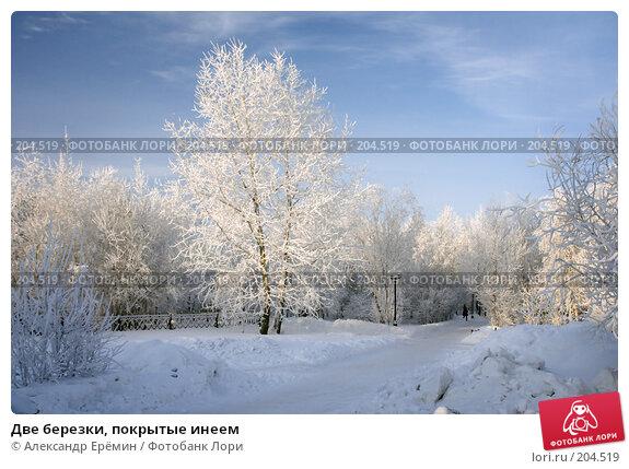 Две березки, покрытые инеем, фото № 204519, снято 16 января 2008 г. (c) Александр Ерёмин / Фотобанк Лори
