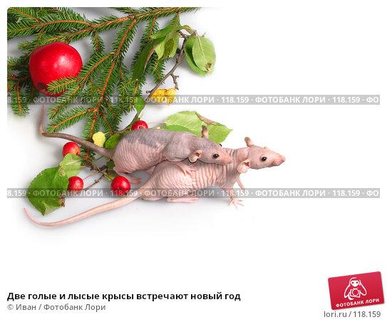 Две голые и лысые крысы встречают новый год, фото № 118159, снято 23 сентября 2007 г. (c) Иван / Фотобанк Лори